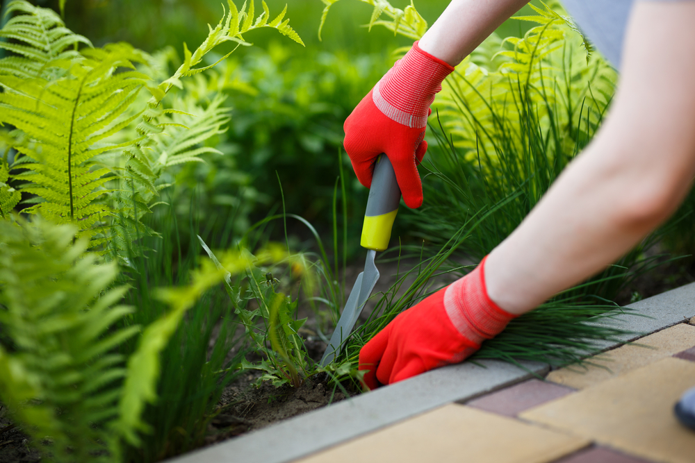 Easy Ways To Beat The Stubborn Weeds Naturally